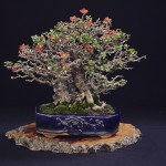 european bonsai-san show saulieu 2014 - 27