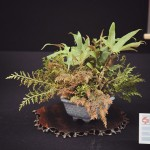 european bonsai-san show saulieu 2014 - 32
