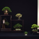 european bonsai-san show saulieu 2014 - 39