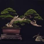 european bonsai-san show saulieu 2014 - a6