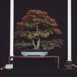 european bonsai-san show saulieu 2014 - palmatum 8