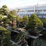 Visite en vidéo à Kouka-en - Mr Fujikawa
