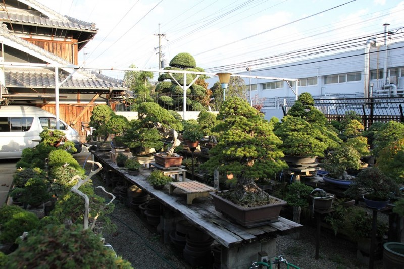 jardin kouka-en - 01