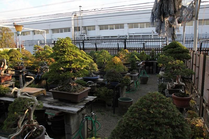 jardin kouka-en - 02