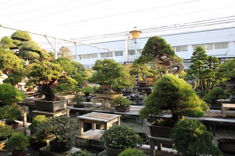 jardin kouka-en - 03