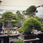 koukaen bonsai garden - 01