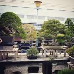 koukaen bonsai garden - 02