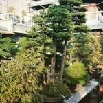 koukaen bonsai garden - 03