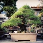 koukaen bonsai garden - 05