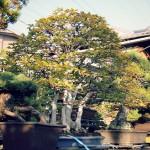 koukaen bonsai garden - 06