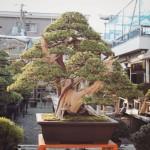 koukaen bonsai garden - 07