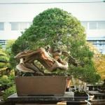 koukaen bonsai garden - 08