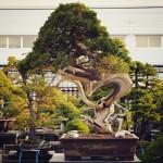 koukaen bonsai garden - 11