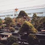 koukaen bonsai garden - 12