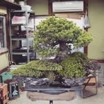koukaen bonsai garden - 13