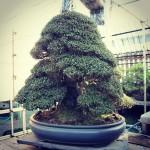 koukaen bonsai garden - 14
