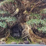 koukaen bonsai garden - 15