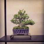 gardenia tanibata syoukaen