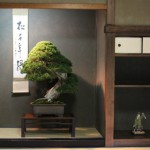 Un kazari shin à la Takamatsu Bonsai Convention