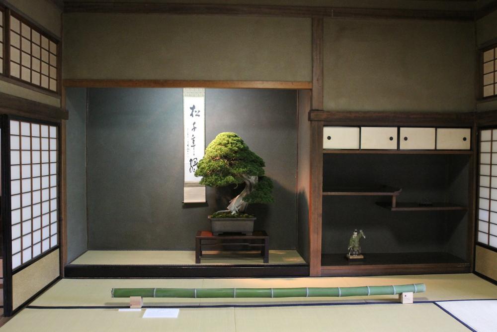 http://actubonsai.com/wp-content/uploads/2015/02/juniperus-tokonoma-takamatsu-bonsai-convention.jpg