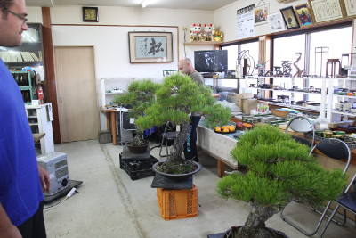 hiramatsu bonsai school
