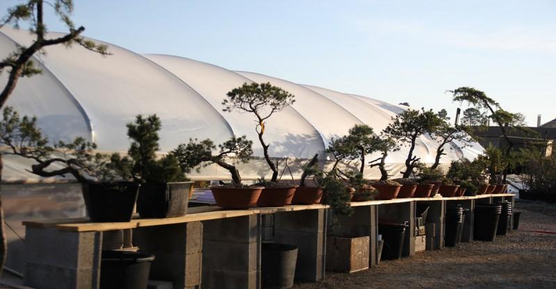 pepinière de yamadori bonsai