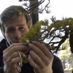 apprendre le bonsai avec bjorn