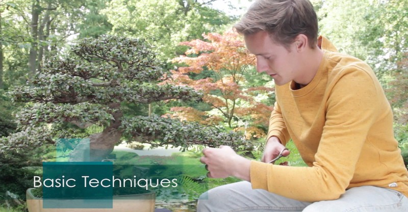 apprendre le bonsai en video