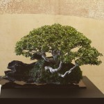 omiya-bonsai-museum-03