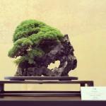 omiya-bonsai-museum-04