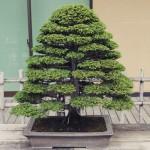 omiya-bonsai-museum-07