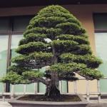 omiya-bonsai-museum-08