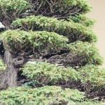 omiya-bonsai-museum-09