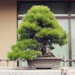 omiya-bonsai-museum-11