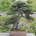omiya-bonsai-museum-12