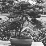 omiya-bonsai-museum-13