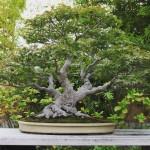 omiya-bonsai-museum-14