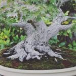 omiya-bonsai-museum-15