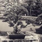 omiya-bonsai-museum-16