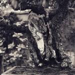 omiya-bonsai-museum-17