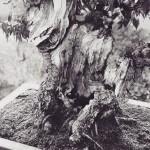 omiya-bonsai-museum-18