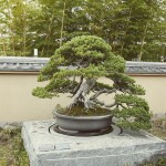omiya-bonsai-museum-19