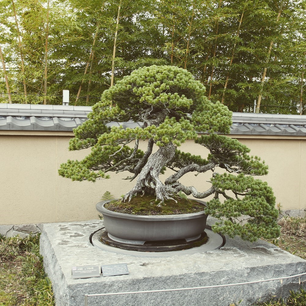Une journ e de visite omiya actubonsa - Video bonsai jardin japonais ...