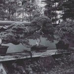 omiya-bonsai-museum-21