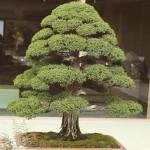 omiya-bonsai-museum-22