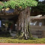 omiya-bonsai-museum-23