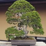 omiya-bonsai-museum-24