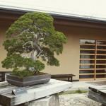 omiya-bonsai-museum-25