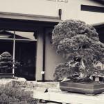 omiya-bonsai-museum-26