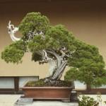 omiya-bonsai-museum-27
